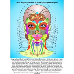 Mapa projekcji narządów na twarzy