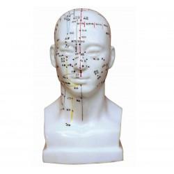 Model człowieka 84 cm