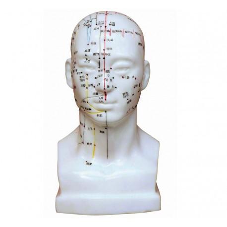 Model głowy