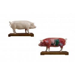 Model świni