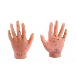 Model dłoni