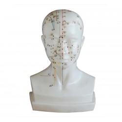 Model głowy - wymiar rzeczywisty