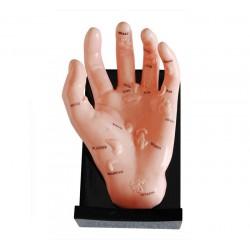 Model ręki ilustrujący punkty organów